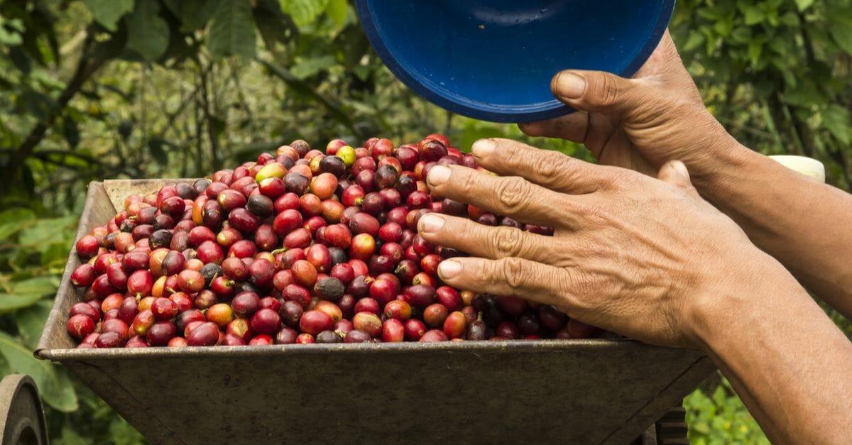 『森のコーヒー』コーヒー豆