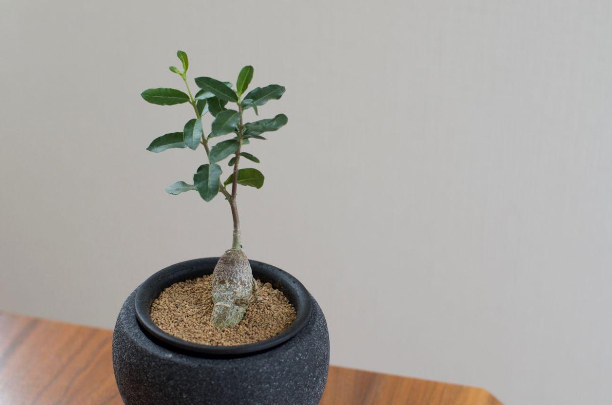 コーヒーと多肉植物7