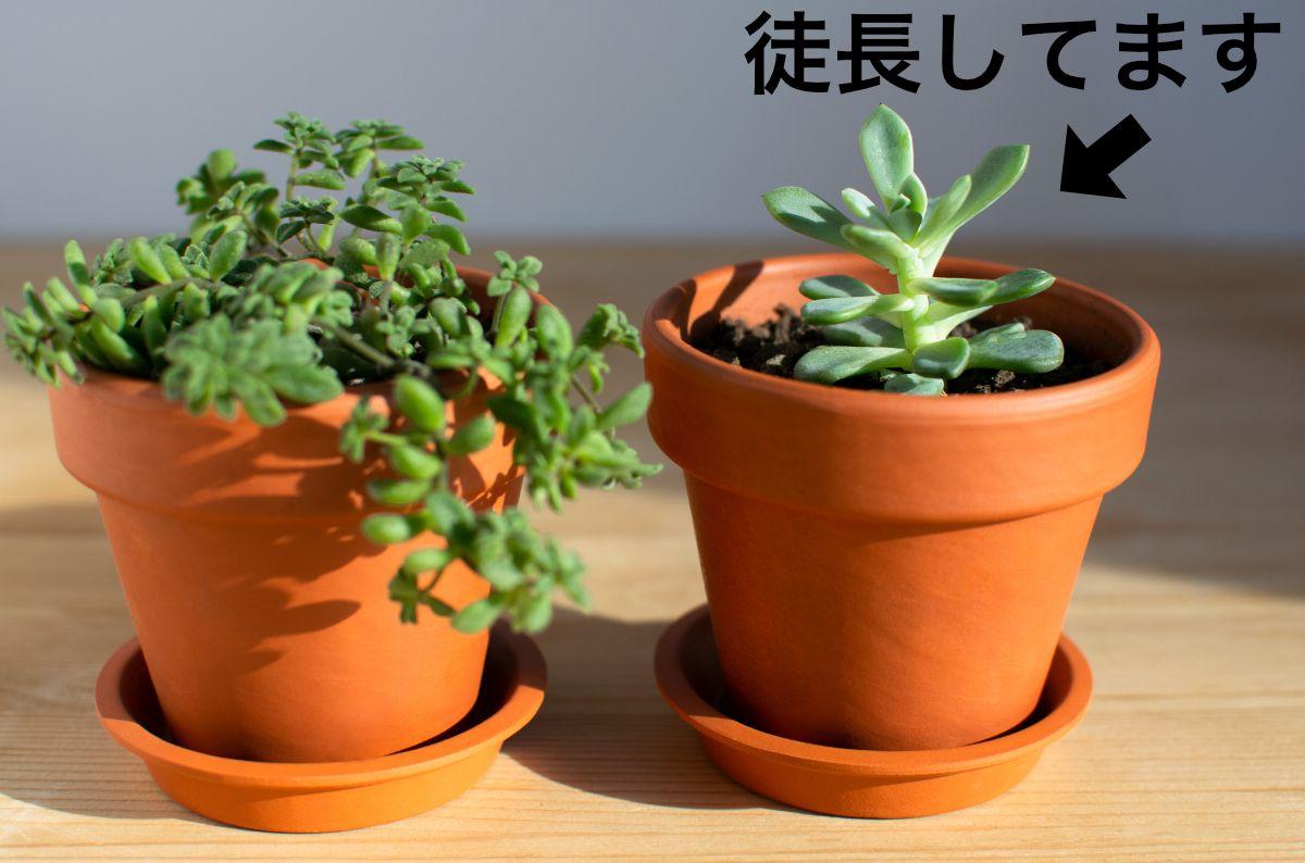コーヒーと多肉植物11