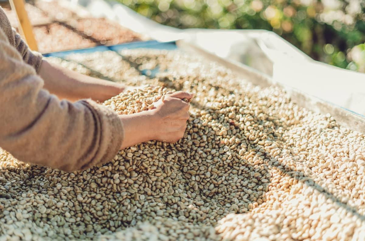 コーヒー豆の選び方 コーヒー農園とシングルオリジン