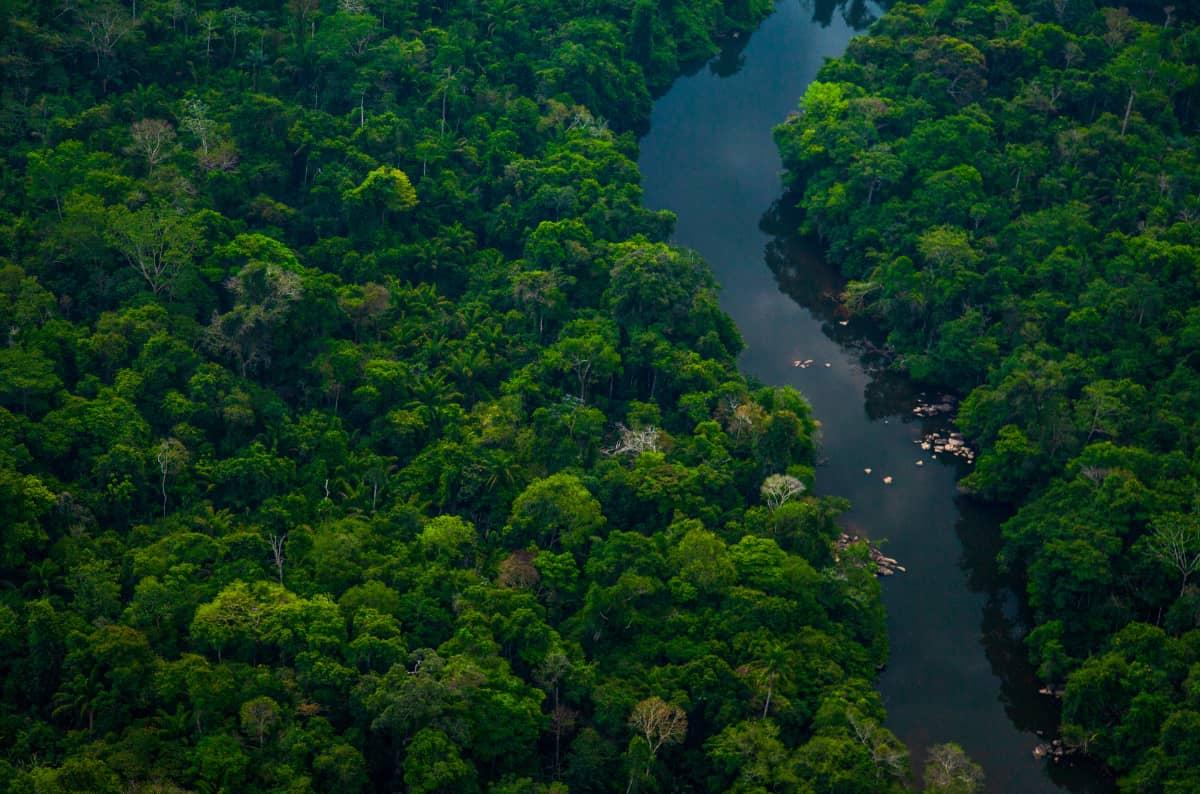 コーヒー豆 レビュー 土居珈琲 ブラジル ショコラ アマゾン アマゾン川 ジャングル 失われた世界