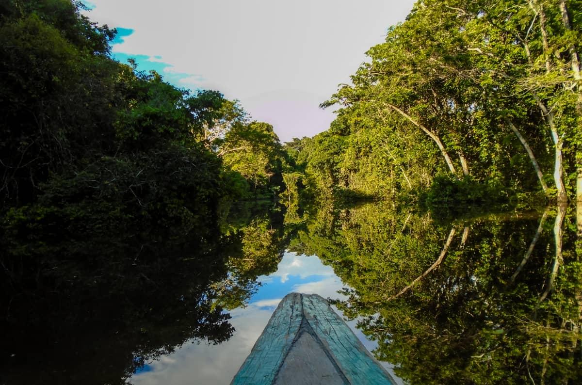 コーヒー豆 レビュー 土居珈琲 ブラジル ショコラ アマゾン アマゾン川 ジャングル 失われた世界 カヌー