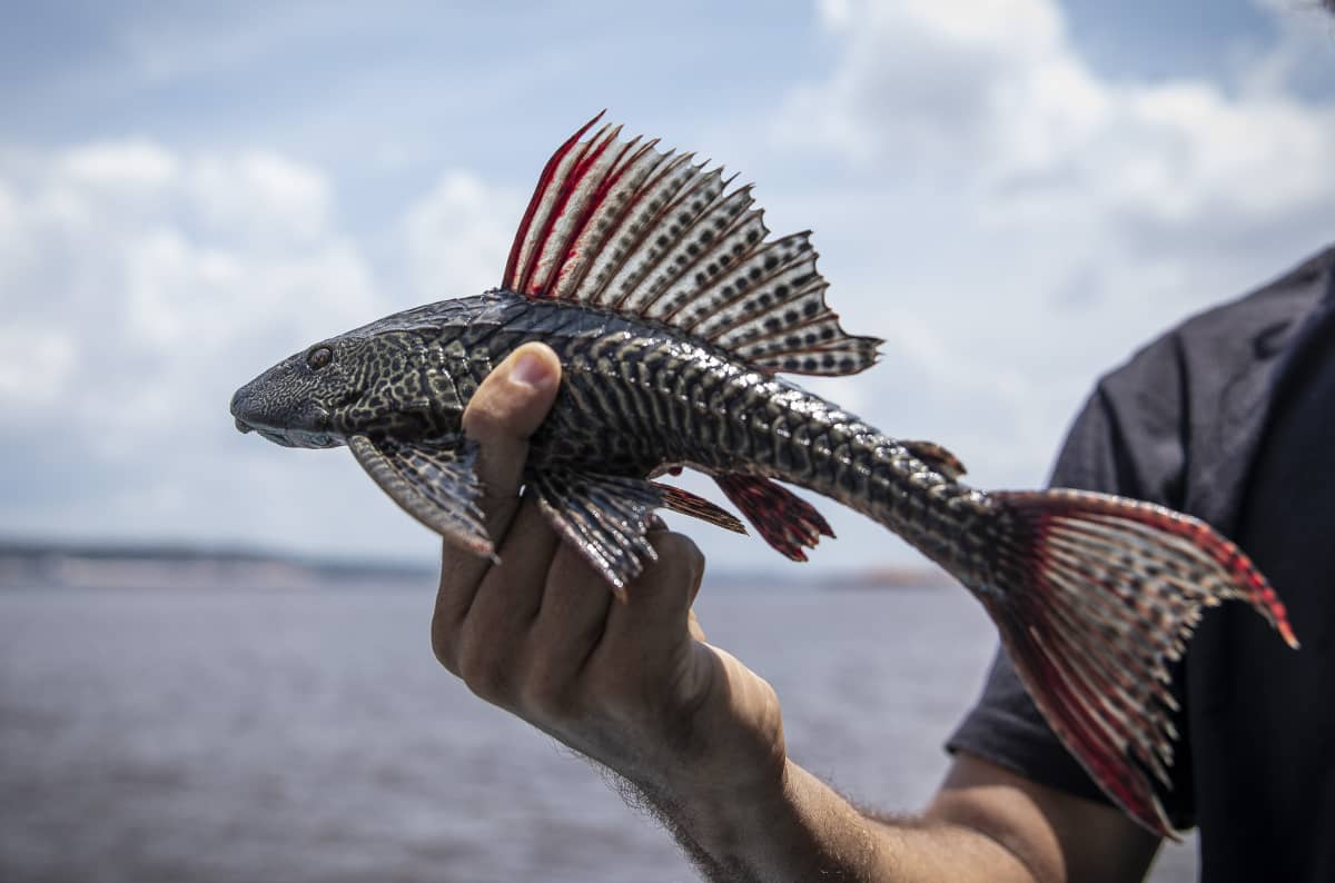 コーヒー豆 レビュー 土居珈琲 ブラジル ショコラ アマゾン アマゾン川 ジャングル 失われた世界 珍しい魚